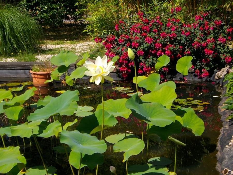 Visite de jardin écologique à Arzal Morbihan Bretagne