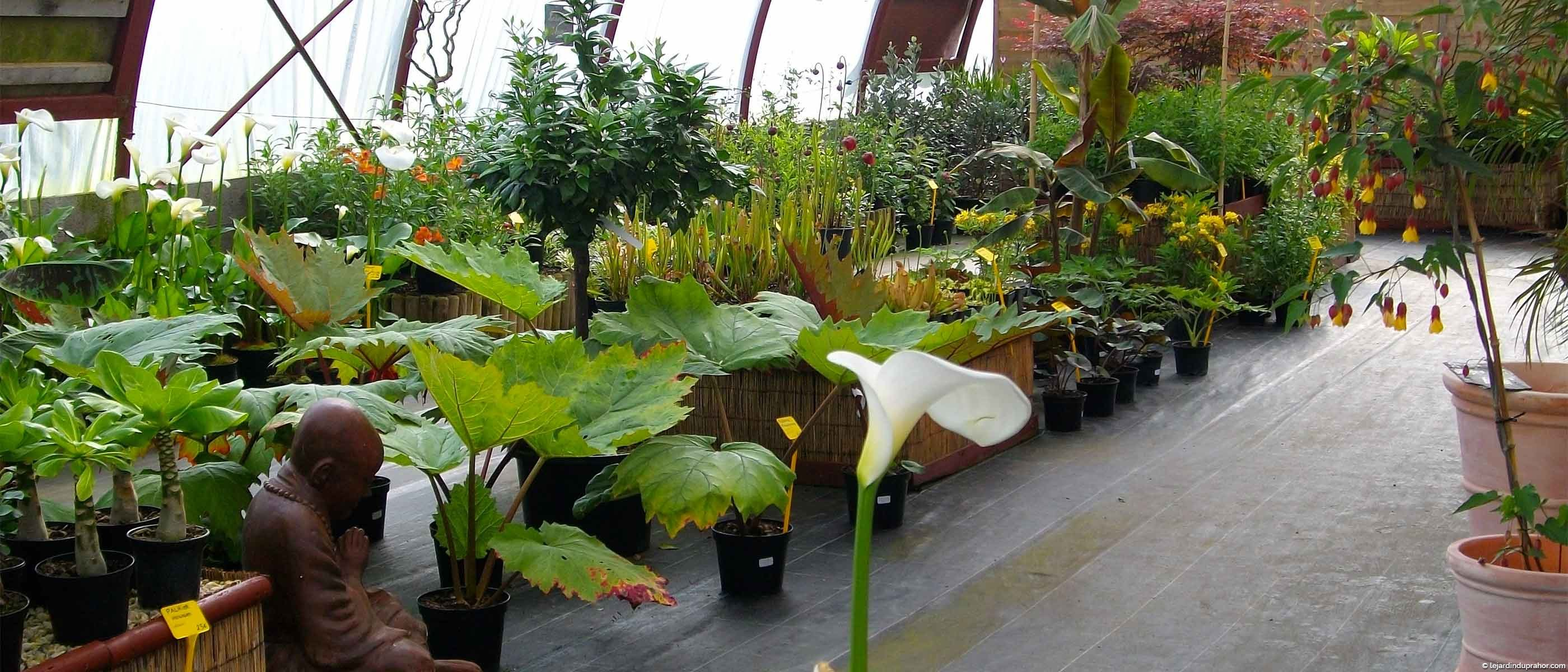Rhubarbe g ante et arum g ant le jardin du prahor for Graminee geante