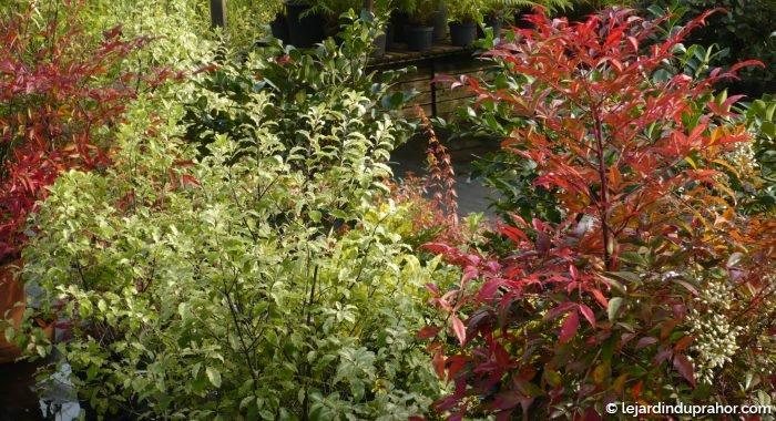 P pini re cologique et jardin visiter morbihan le for Destockage plantes jardin