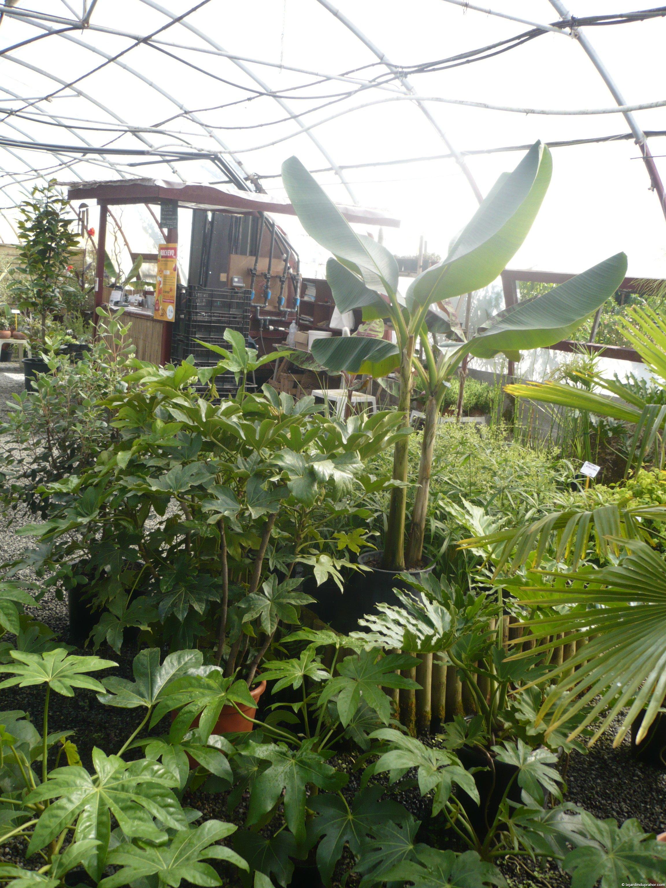 Plantes exotique le jardin du prahor for Plante exotique jardin